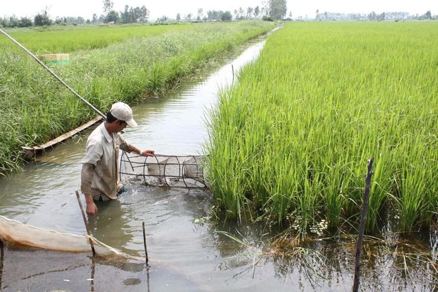 Seminar Khả năng thay thế giữa các yếu tố đầu vào trong sản xuất nông nghiệp